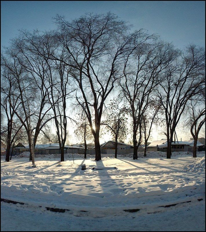 январь, деревья, панорама Январская улыбкаphoto preview