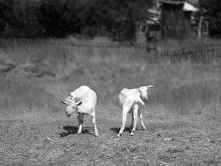 Деревенские танцы