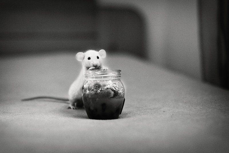dorian, xerxes, honey, nuts, mouse ...photo preview