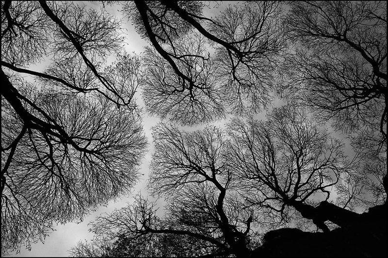 небо,дыхание,артерии,кровь Капиллярыphoto preview