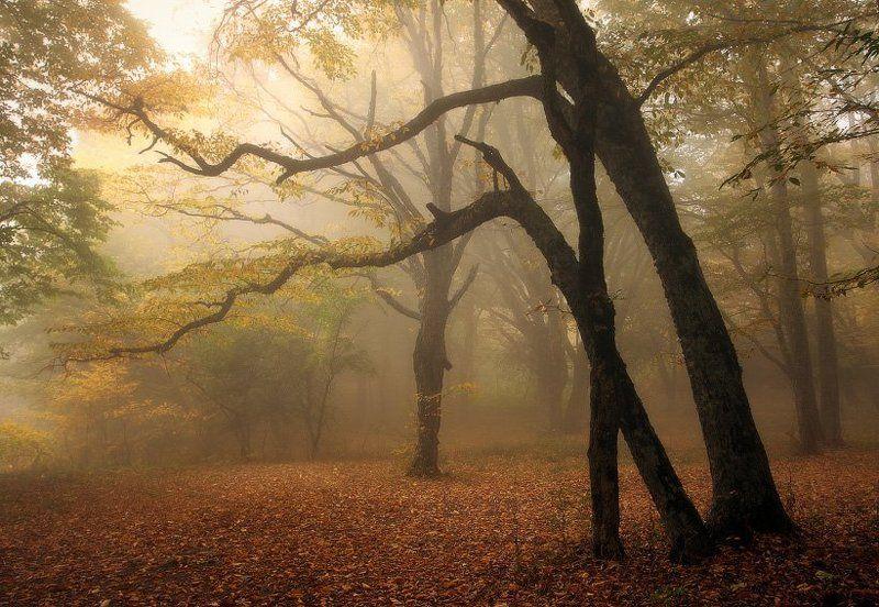 крым Осенняя зарисовкаphoto preview