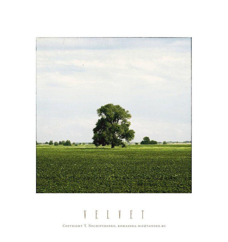 дерево лето ***photo preview