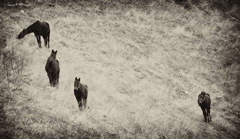 четыре, лошади Четыреphoto preview