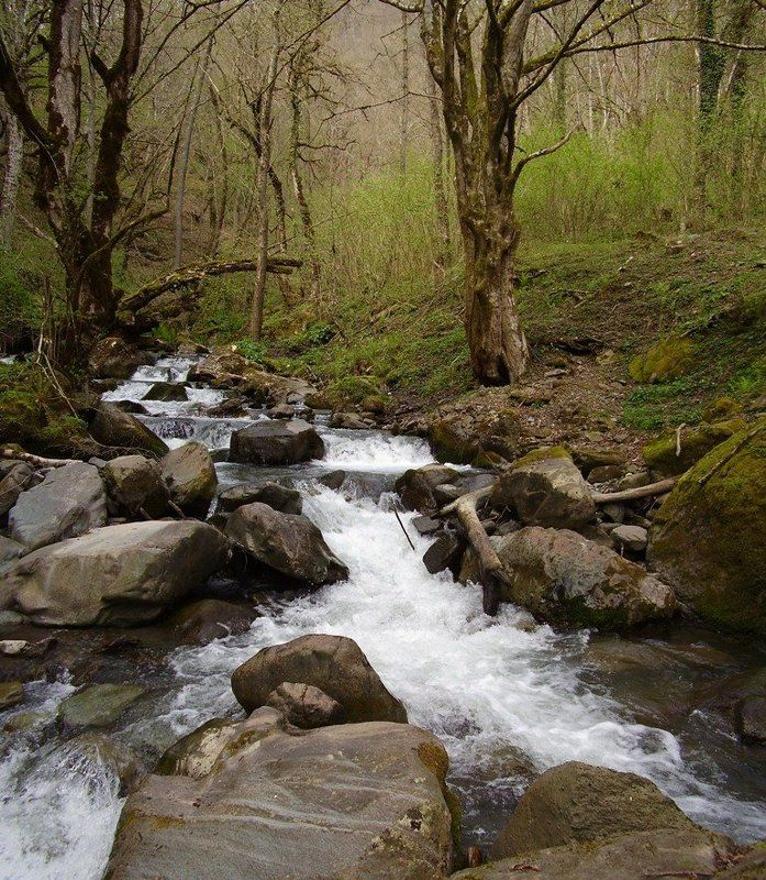 весна, панорама, ручей, вода, лес, сочи, красная поляна Весенний горный ручейphoto preview