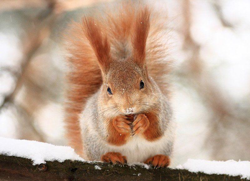 зима, обед, рыжая Рыжаяphoto preview