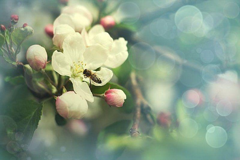 13cat Веснаphoto preview