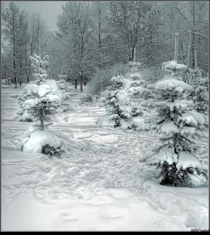Зимний паркphoto preview