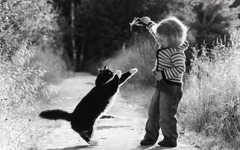 солнце,девочка,дети,кошка,лето,трава,тепло Попробуй, поймай!photo preview
