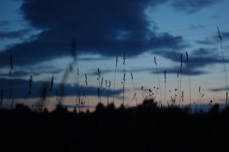 поле, лес, природа, закат, сумерки, никон, копылово, томск, никон полеphoto preview