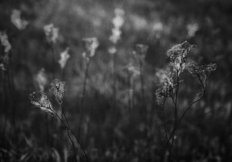 Природа, паутина, монохромное фото Паутинаphoto preview