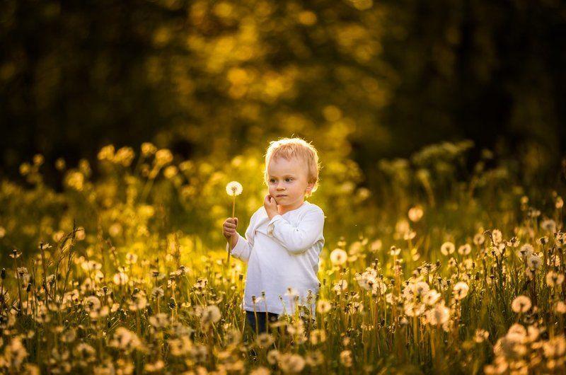 dandelions, dandelion, child , portrait, people, poland, nature Dandelions!photo preview