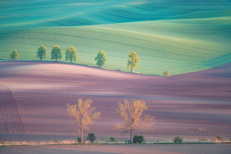 Moravian springphoto preview
