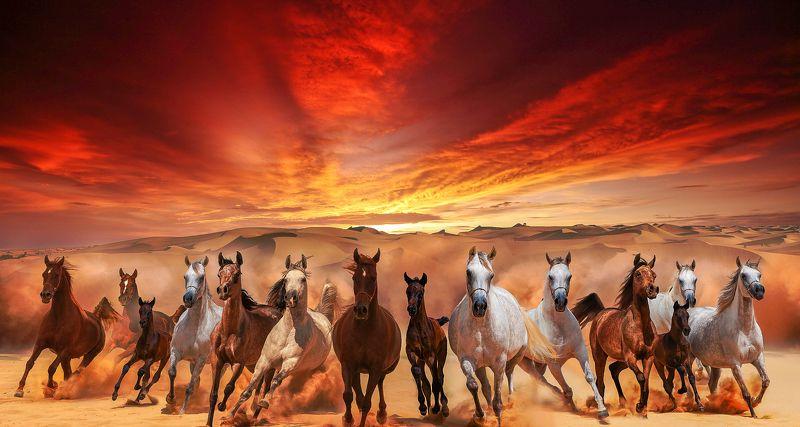 Dunes, Sahara, Sand, Sky, Sunset freedomphoto preview