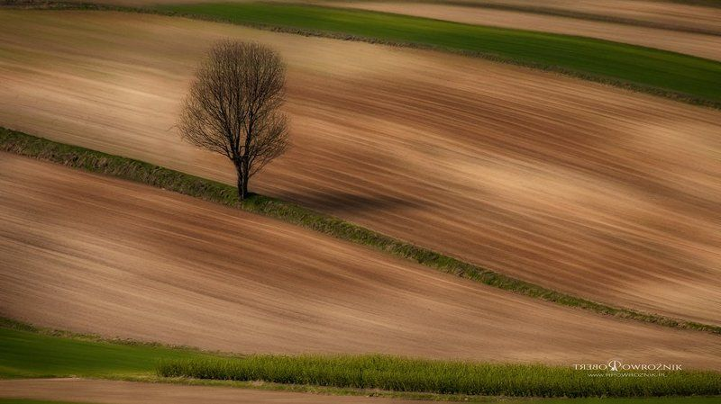lonely, tree, fields, landscape, canon, rpowroznik lonely...photo preview