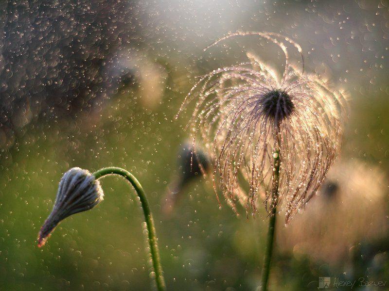 сон-трава, прострел,  Лучшие друзья блондинок это бриллианты (с)photo preview