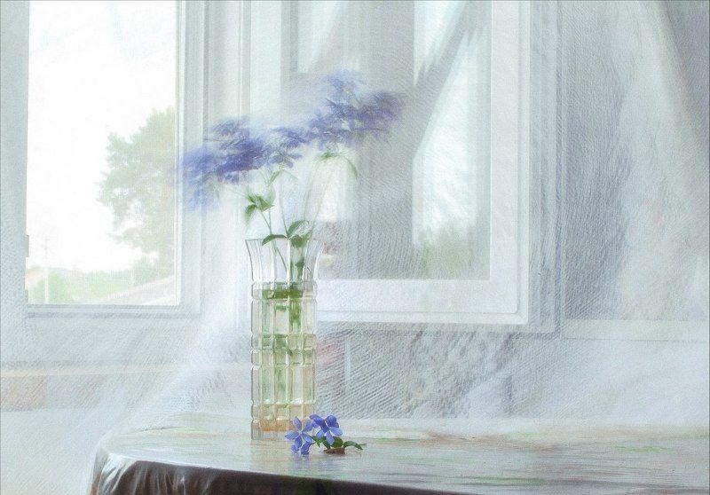 Цветы лето разговор цветка и ветраphoto preview