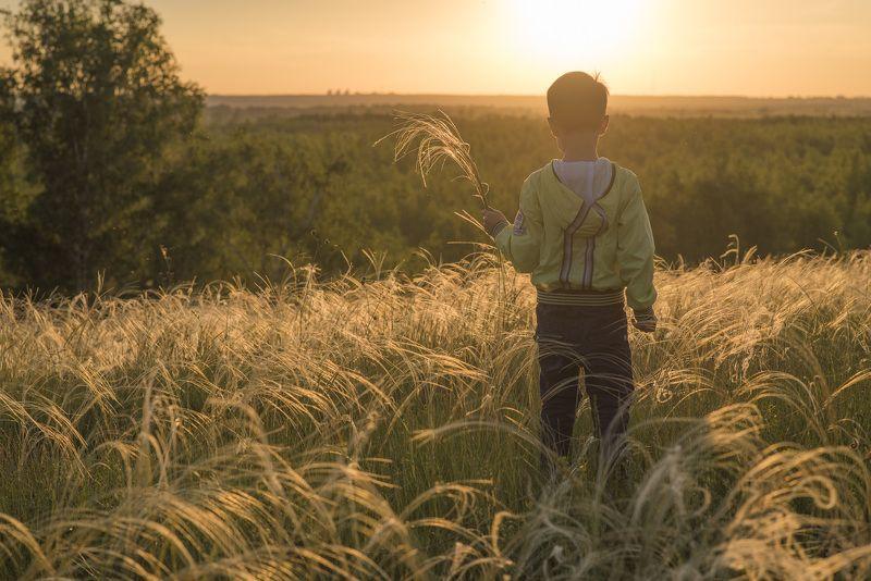 пейзаж, природа, закат, вечер, лето, поле Цветущий ковыльphoto preview