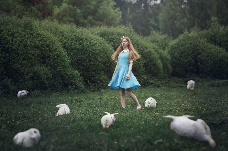 жанр Белый кроликphoto preview