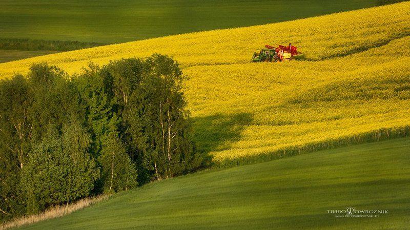 landscape, summer, fields, canon, rpowroznik, light red potnt...photo preview