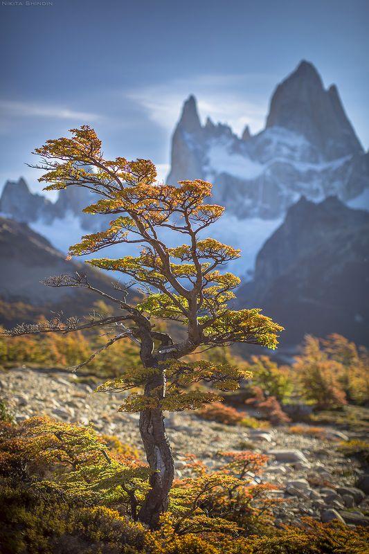 патагония Патагонское деревоphoto preview