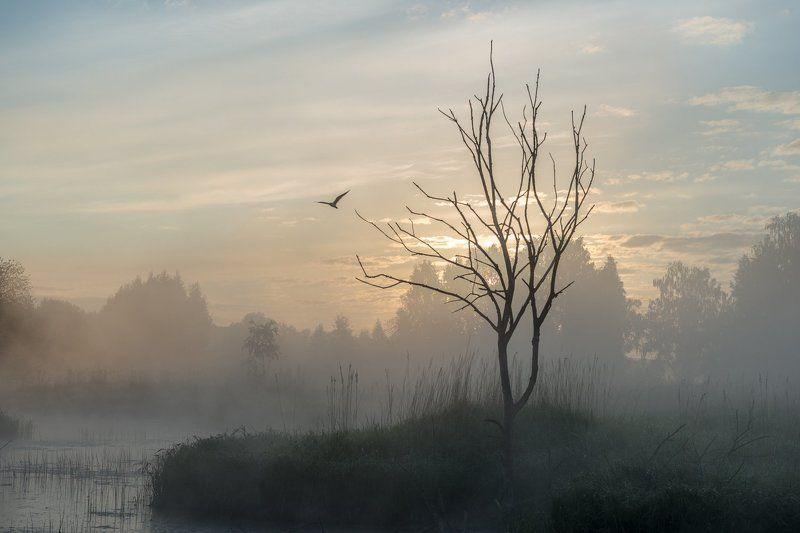 Утро на Истреphoto preview