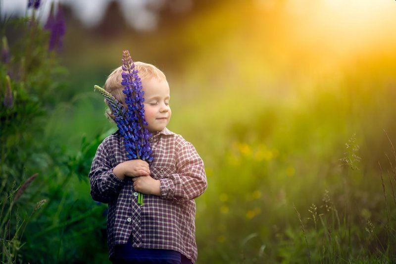 child, children, portrait, boy, nature, grass, meadow, flowers, sun Lupinusphoto preview