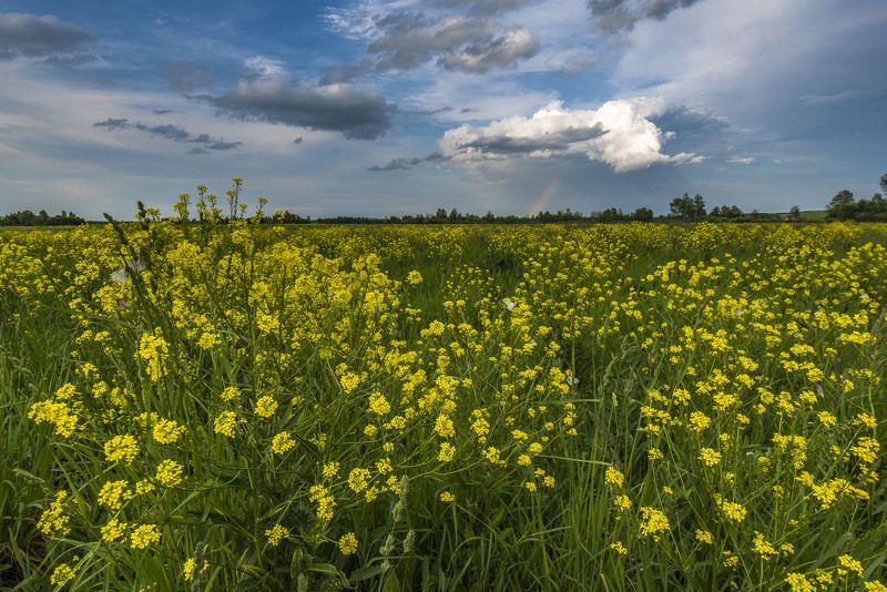 бабочки, облака, поле, цветы, пейзаж, радуга, лето Радуга над летним полемphoto preview