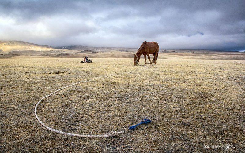 Монголия Конь, привязь, седло. И никого!photo preview