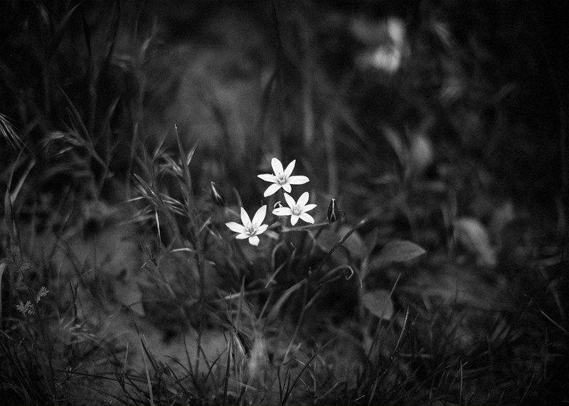 цветы, флора, растения, природа photo preview