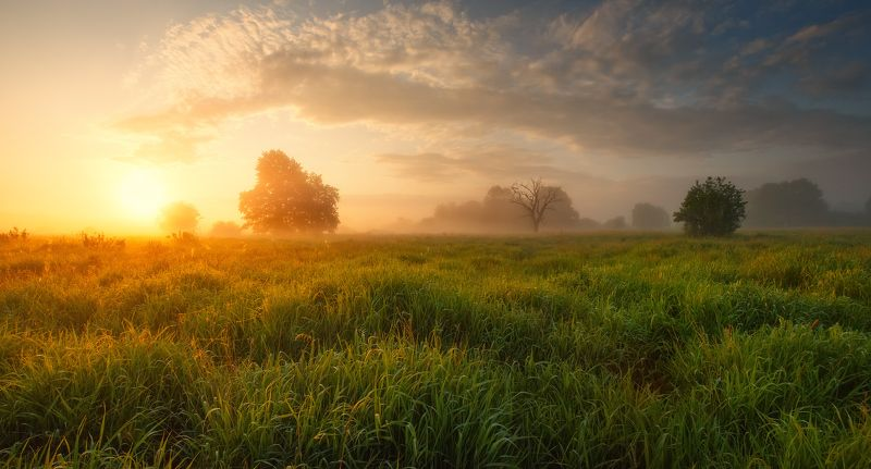 Июньский рассветphoto preview
