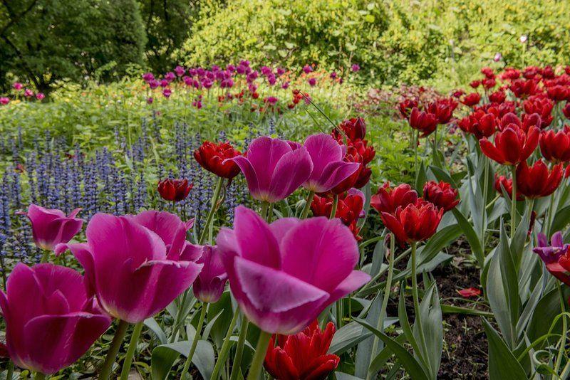 Весна, Парк, Природа, Тюльпаны, Цветы photo preview