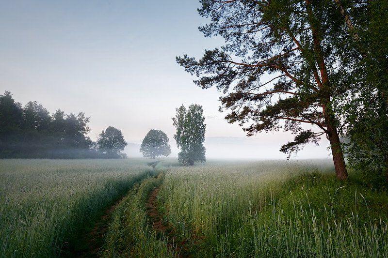 Пейзаж, Поле, Россия, Туман, Утро Утро туманное во ржиphoto preview