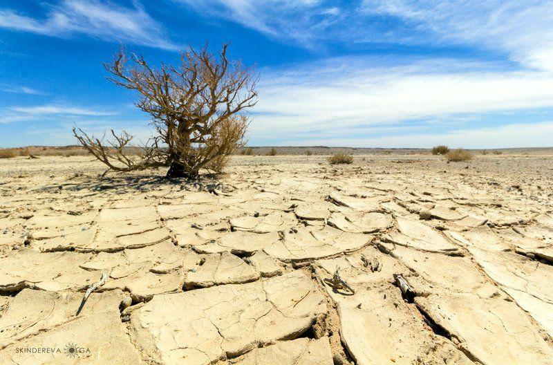 Сулейменова: Казахстан ежегодно теряет около 93 млрд тенге из-за засухи