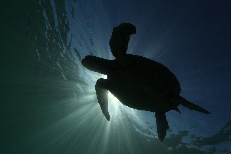 Черепаха Черепахаphoto preview