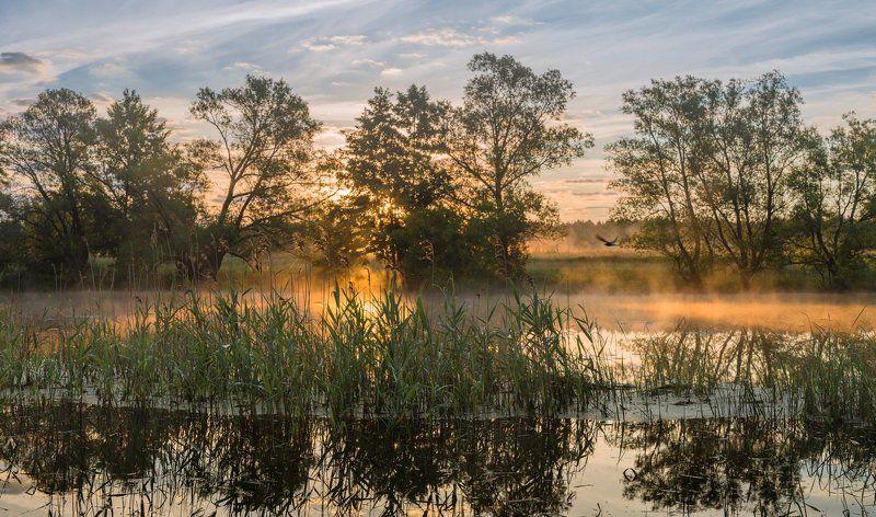 На реке с первыми лучами солнца!photo preview