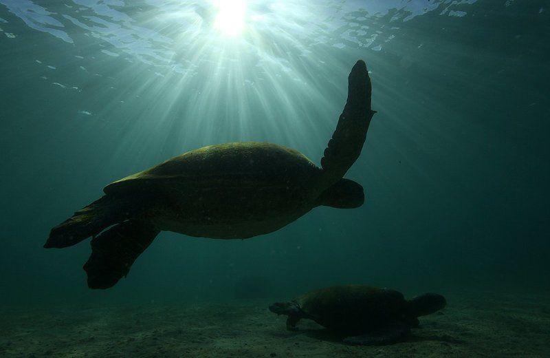 Черепаха Черепахиphoto preview