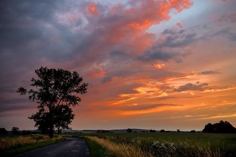 sunset, evening, orange, alone, tree, road Sunsetphoto preview
