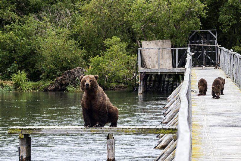 Медведи, Камчатка, Курильское Озеро Рыбалка с детьмиphoto preview