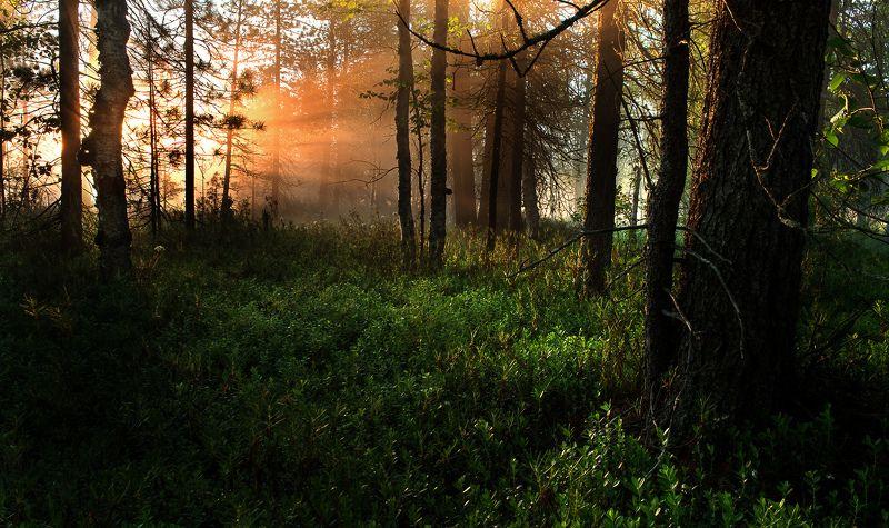 Рассвет, Солнце, Туман, Утро Рассвет  в лесуphoto preview