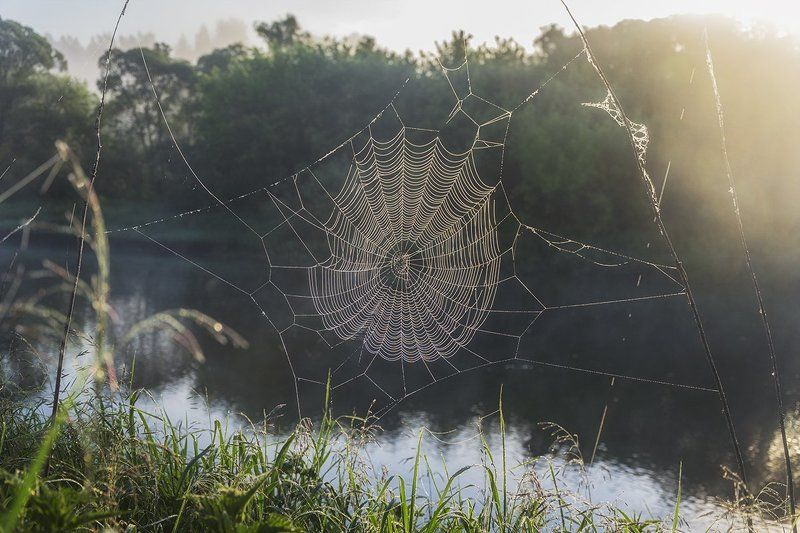 2016, Июнь, Паутина, Природа, Рассвет, Россия, Тульская область, Утро Сетиphoto preview