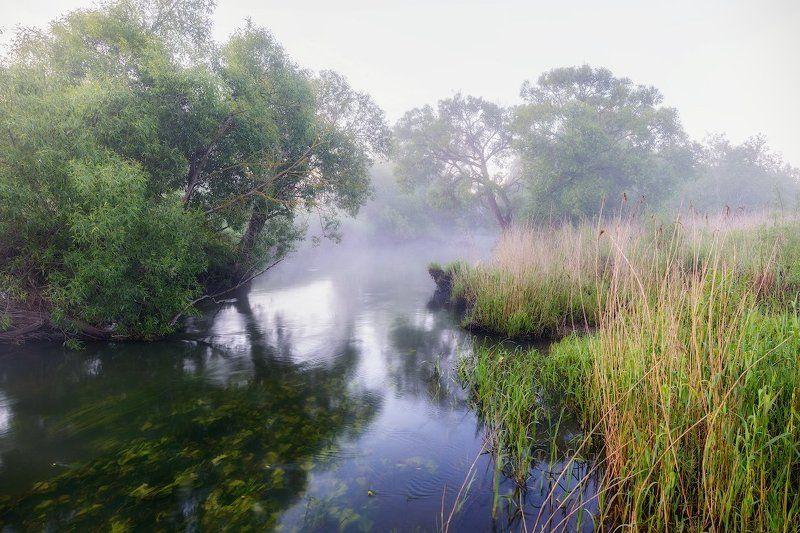 Река Вихра, Смоленская область, Туман, Утро Вихровское, утреннее.photo preview