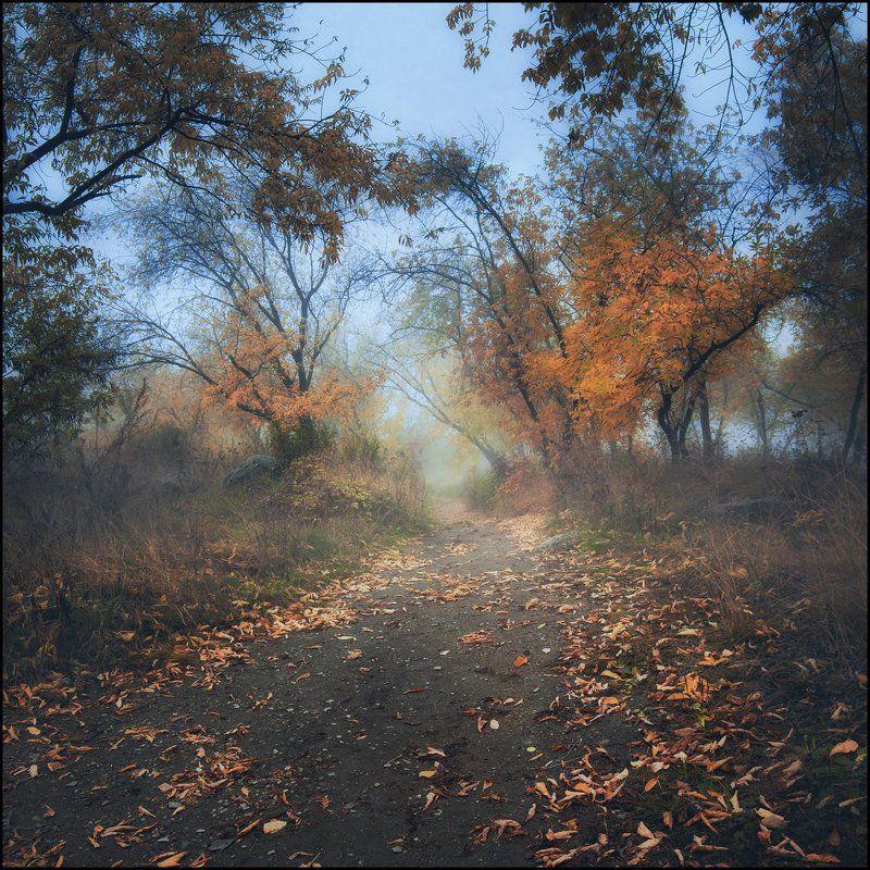 Осень, Туман ***photo preview