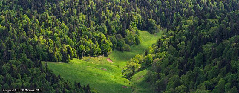 zubr.photo, горы, заповедник, зубры, кавказ, лес, пейзаж Дома у зубровphoto preview