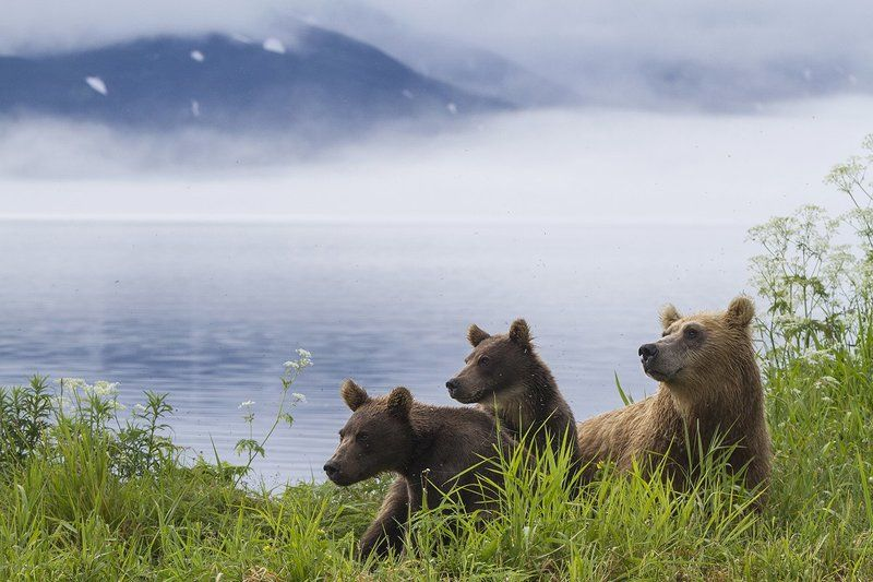 Медведи, Камчатка, Курильское Озеро Утро на Курильском Озереphoto preview