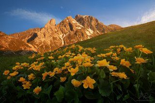 Blooming Dolomites