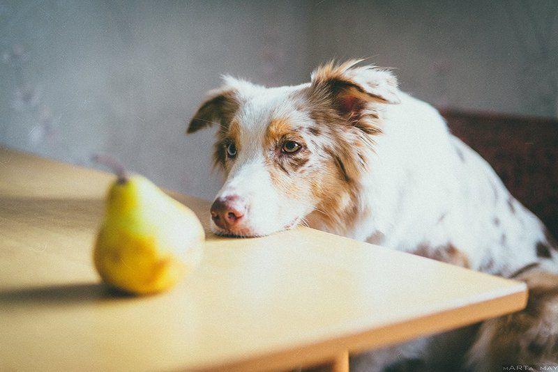 собака Девочка с грушейphoto preview