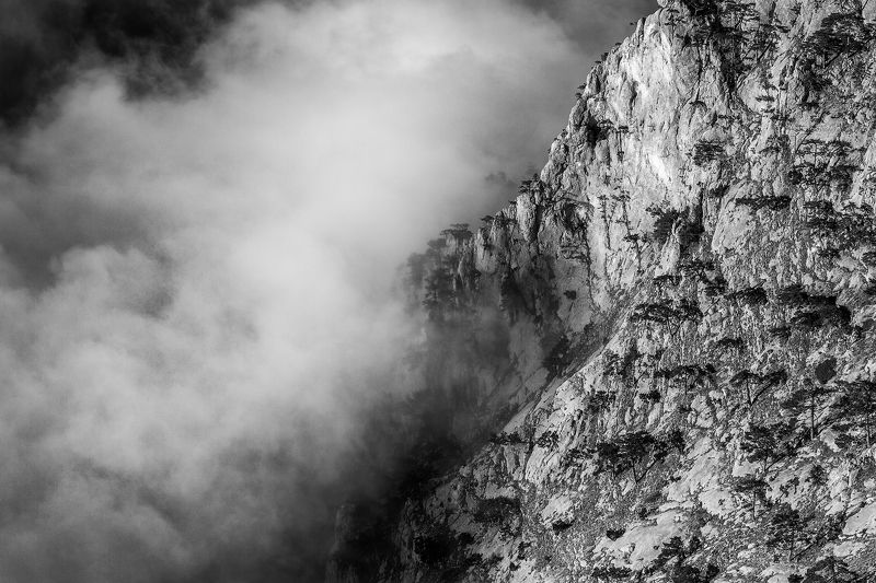 Всё поглощающий туманphoto preview