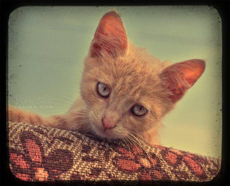 кошки Потеряшкаphoto preview