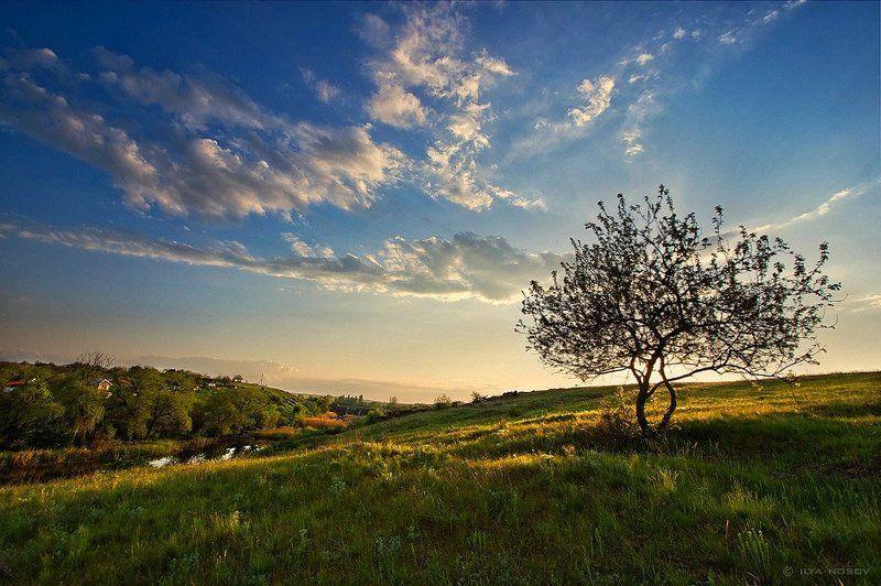 В теплый весенний вечер возле одинокой вишни.photo preview