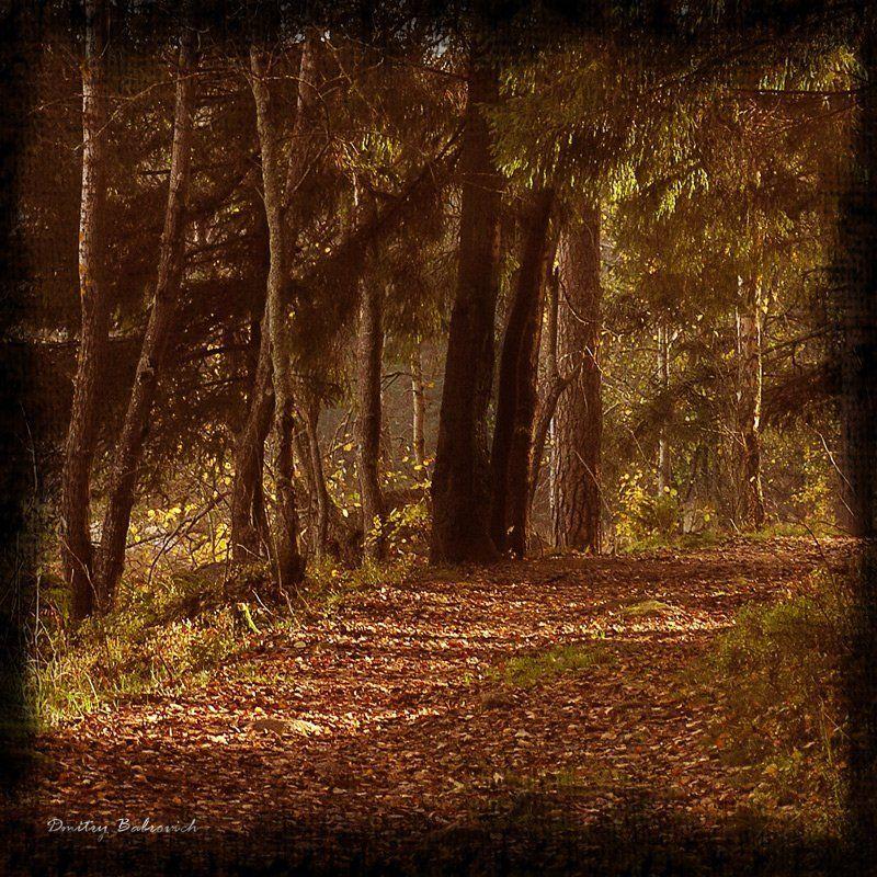 под, выборгом forestphoto preview